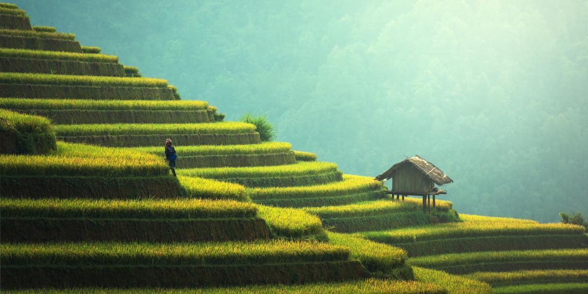 - Singapore e Bali